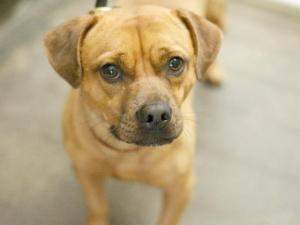 Harley as Journey @ the North LA shelter