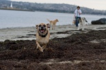 Maggie loves to run!