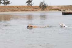 Maggie swims!