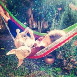 Stevie Nicks the Hammock Swinger