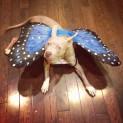 Stevie Nicks the Sweet Pupperfly